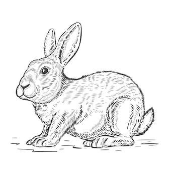 白い背景で隔離のウサギのイラスト。グリーティングカード、ラベル、エンブレム、看板、ポスターの要素。図。