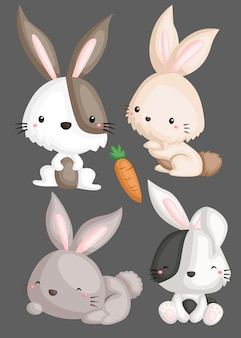 Rabbit image set