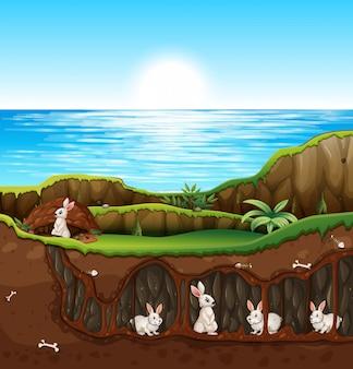 지하에 사는 토끼