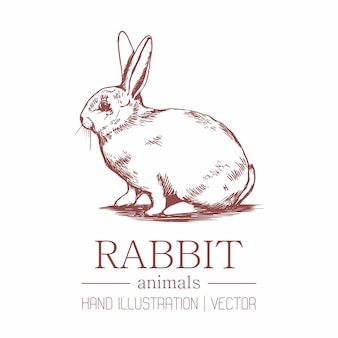 Rabbit. vintage style. hand drawing.