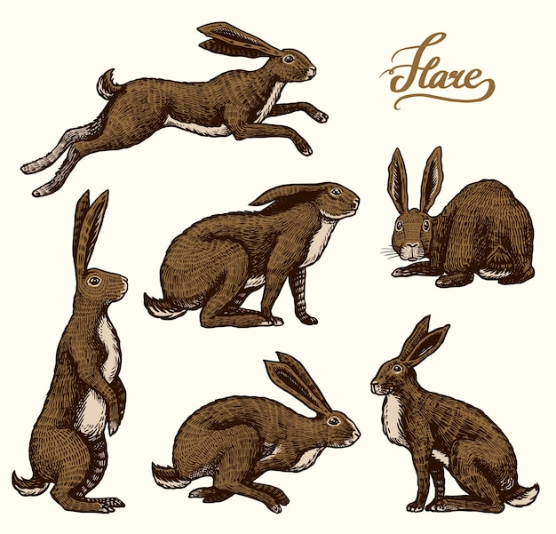 Rabbits are sitting and jumping