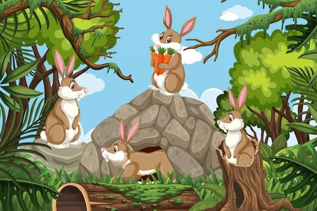 Rabbits in jungle scene