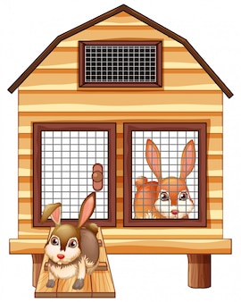 Rabbits in the wooden coop