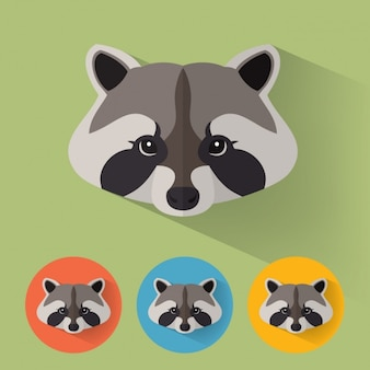 Raccoon designs collection