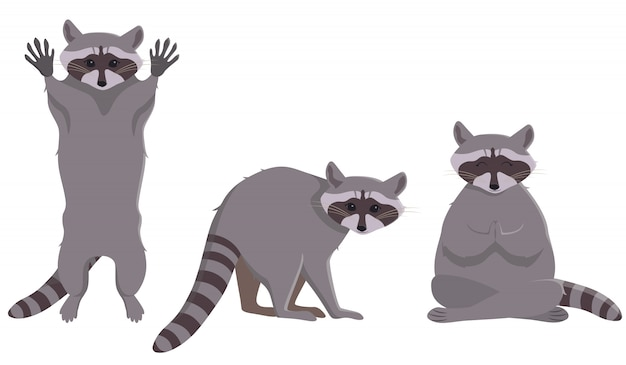 Raccoon in different poses. cute animal in cartoon style.