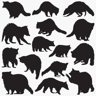 Raccoon silhouettes