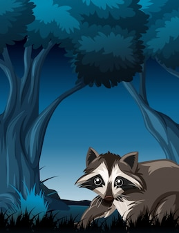 Raccoon in wild forest