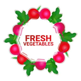 Radish vegetable colorful circle copy space organic over white pattern background healthy lifestyle or diet concept