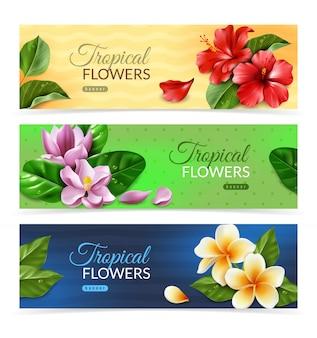 レーリスティックなエキゾチックな花の水平方向のバナー。孤立した熱帯の花と葉の花束と現実的なスタイルでエキゾチックな葉を持つ3つの水平方向のバナー