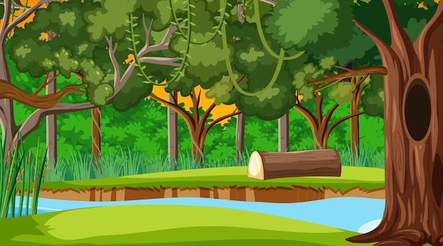Тропический лес или тропический лес во время заката сцены