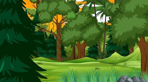 Rainforest or tropical forest at sunset time scene