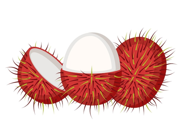 Рамбутан, целые фрукты и открытые, векторные иллюстрации