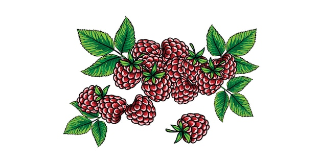 Raspberries with green stem and leaves isolated on the white background.