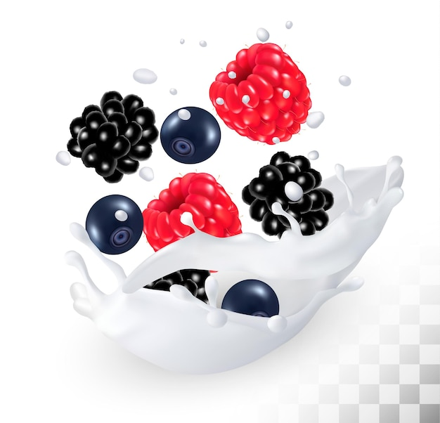 Raspberry and blueberry and blackberry in a milk splash on a transparent background