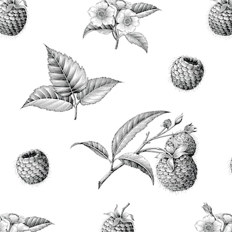 Raspberry fruit botanical seamless pattern hand draw vintage style, isolated.
