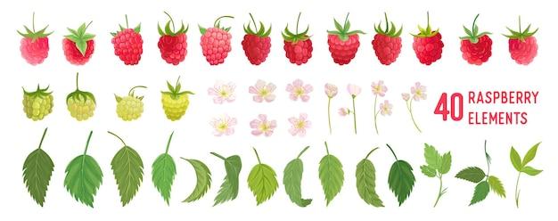 ラズベリーフルーツ水彩要素セット。ベリー、果物、白の葉の孤立したラズベリーコレクション。デザイン、カバー、ウェディングカード、パーティの招待状、背景の植物要素