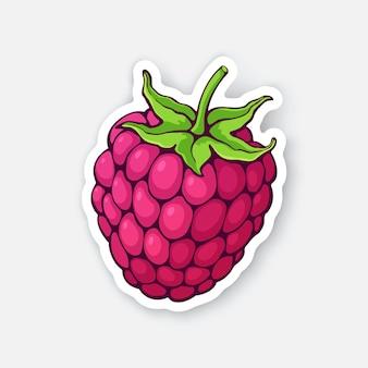 茎とラズベリーフルーツ健康的な食事とベジタリアン料理ステッカーベクトルイラスト