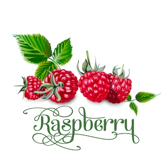 Raspberry leaves and berries isolated on white background