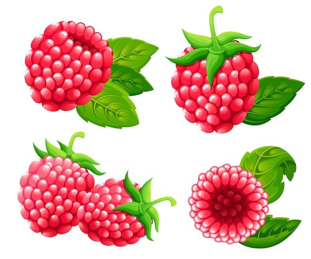 ラズベリーセット。緑の葉とラズベリーのイラスト。装飾的なポスター、エンブレム天然物、ファーマーズマーケットのイラスト