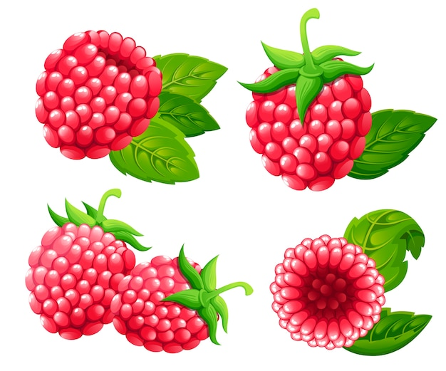 Raspberry set.  illustration of raspberry with green leaves.  illustration for decorative poster, emblem natural product, farmers market