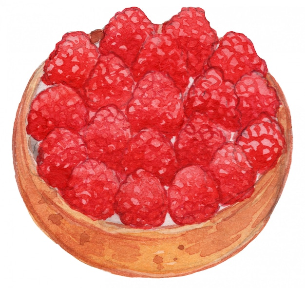 Raspberry tart watercolor drawing illustration