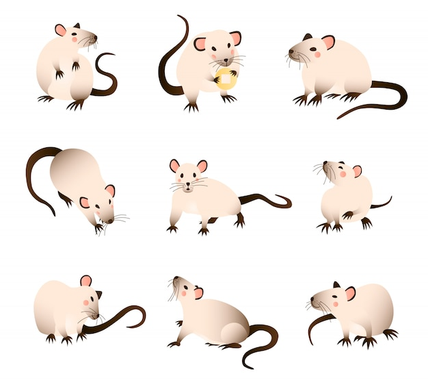Rats collection of cartoon, differed colors rats in various poses and actions