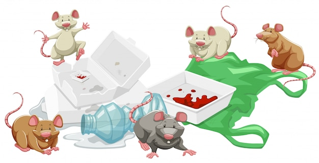 Rats in the trash pile
