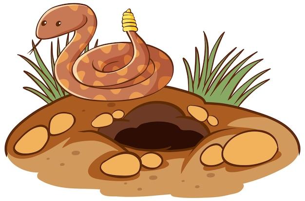 Serpente a sonagli con foro su sfondo bianco