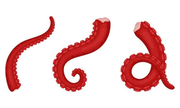Сырые, свежие щупальца осьминога с присосками