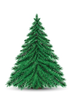 Real christmas spruce tree on stand