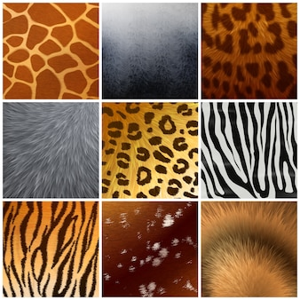 Real and faux exotic fur skin hide texture color pattern 9 realistic samples collection isolated