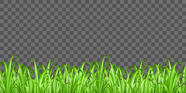 Real green grass on transparent background vector