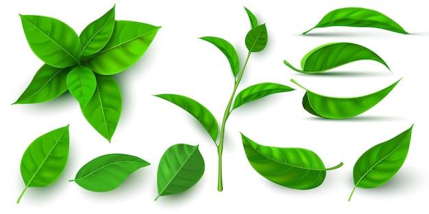 リアルな3dフレッシュティーグリーンの葉と枝。飛んでいる木の葉。お茶やミントの植物の要素。生態学、自然、ビーガンシンボルベクトルセット。植物の苗と飲み物の芽