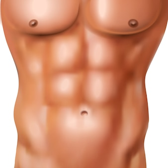 흰색 배경 벡터 일러스트 레이 션에 운동 모양의 몸을 가진 벌거 벗은 남자의 현실적인 복근 팩