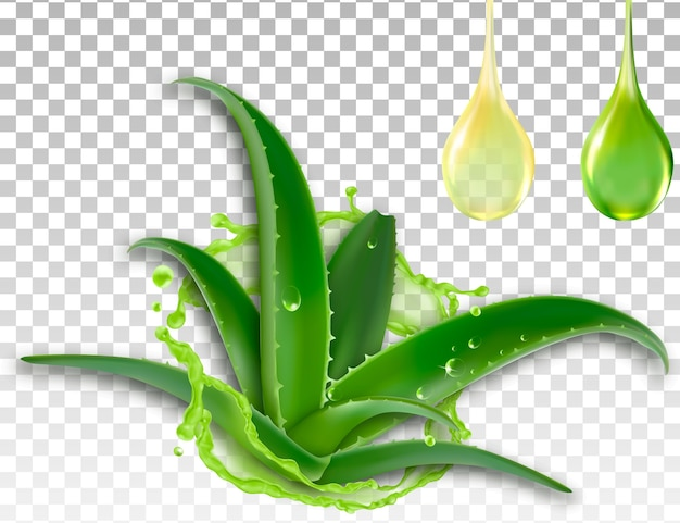 Realistic aloe vera, splash and a drop of juice