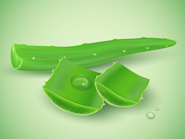 Realistic aloe vera with water drop on green background