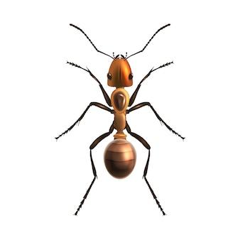Реалистичный муравей изолирован