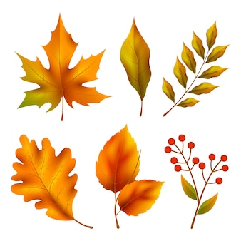リアルな秋の要素コレクション