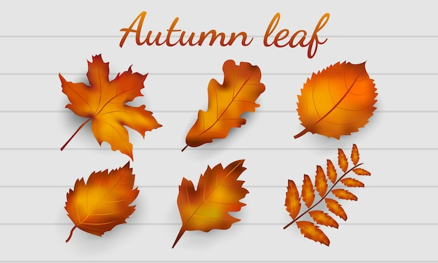 Realistic autumn leaves collection