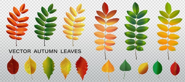 Realistic autumn leaves. fall orange wood foliage of chestnut and maple. oak and ash, linden, birch