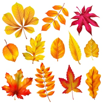 Realistic autumn leaves. fall orange wood foliage of chestnut and maple.