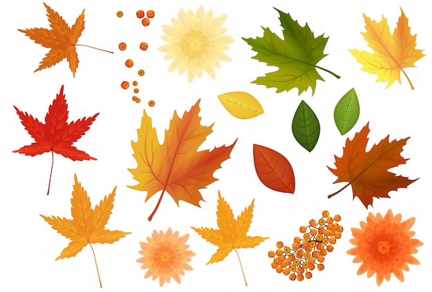 Realistic autumn leaves and flowers set