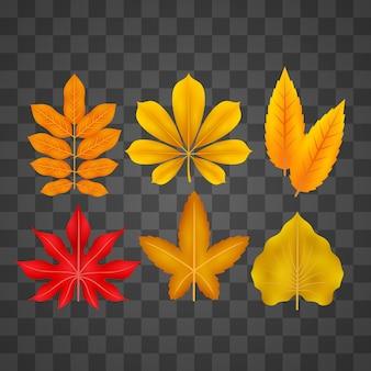 Набор реалистичных осенних листьев
