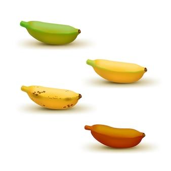 現実的な赤ちゃんバナナ熟度チャートベクトルイラストセット異なる色のバナナ緑の熟していないから茶色に熟している