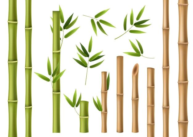 Реалистичный бамбук, изолированные на белом фоне