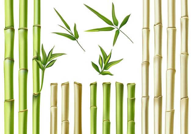 リアルな竹の棒。 3d緑と茶色の枝、茎と葉。自然植物の中空の杖。アジアの竹エコ装飾ベクトルセット。新鮮な緑の葉、自然の有機植物
