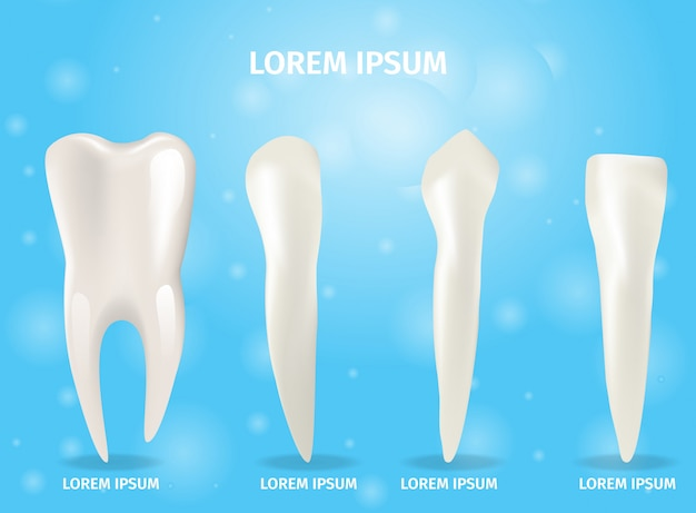 Realistic banner illustration four types of teeth