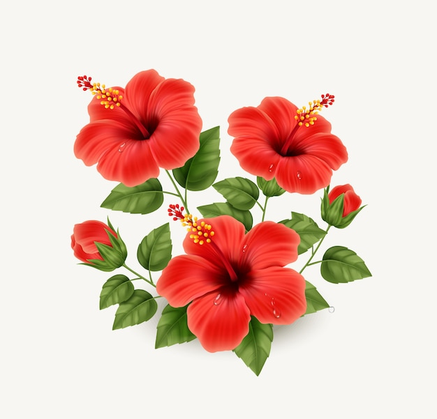 Realistic beautiful hibiscus flower. exotic tropical plant.