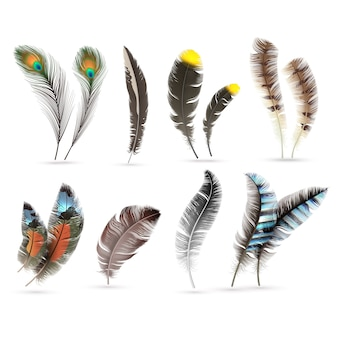 Realistic bird feathers.