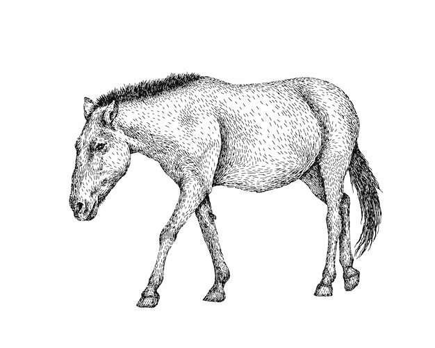 Realistic black and white horse at full length
